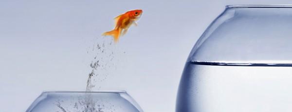 Goldfisch springt von einem Glas in das andere